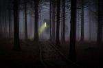 W każdym miejscu niesamowicie spisze się fototapeta las